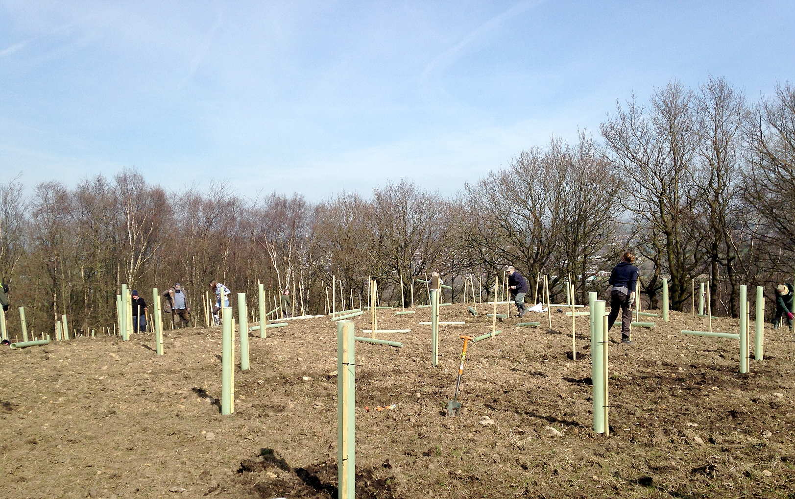 volunteer working with trees for burnley