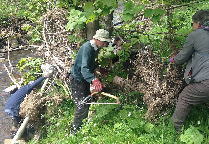 volunteers working with trees for burnley