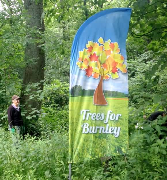 trees for burnley flag